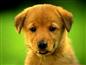 Tygelsjö Hundpensionat